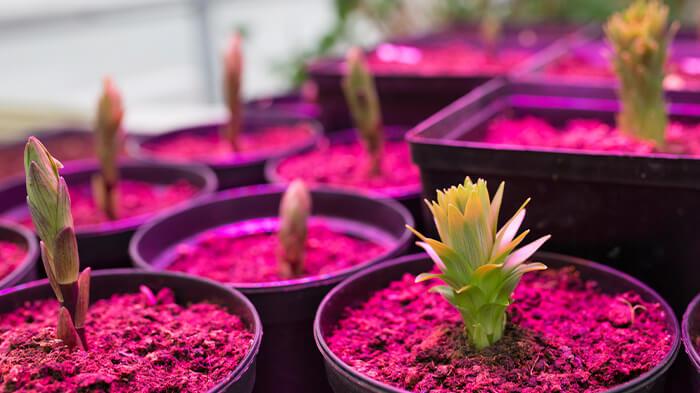 راهنمای خرید لامپ رشد گیاه ، لامپ رشد گیاه ارزان را از کجا بخریم؟