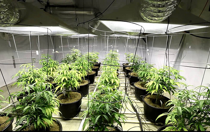 انواع لامپ رشد گیاه