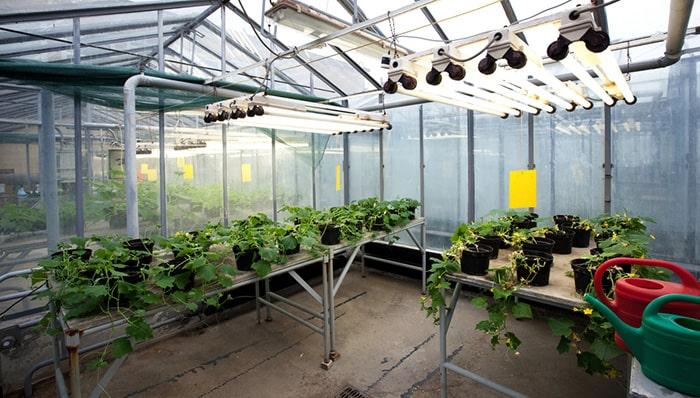 مزایای لامپ فلورسنت رشد گیاه