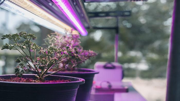 لامپ فلورسنت برای گیاهان